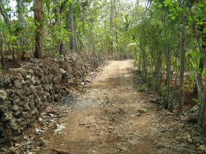 Salah Satu Jalan Desa