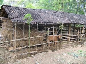 Salah satu Desa Tertinggal